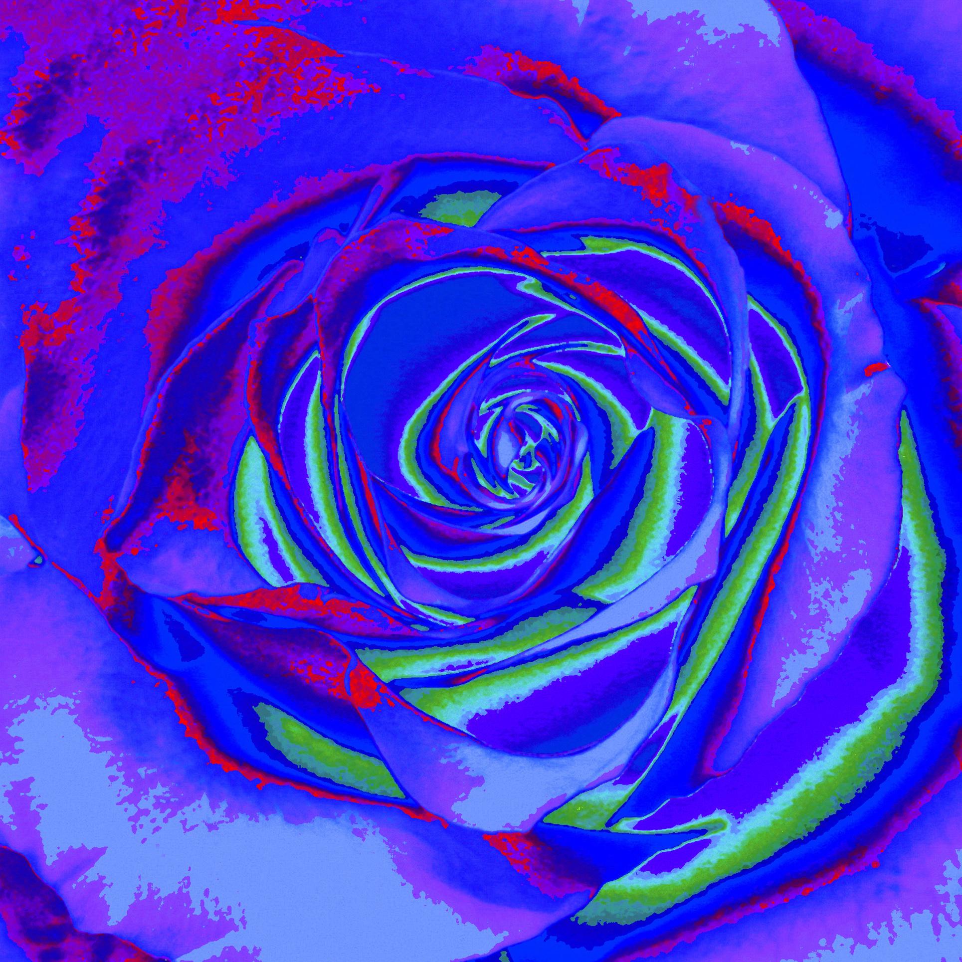 Rose/ Ruža