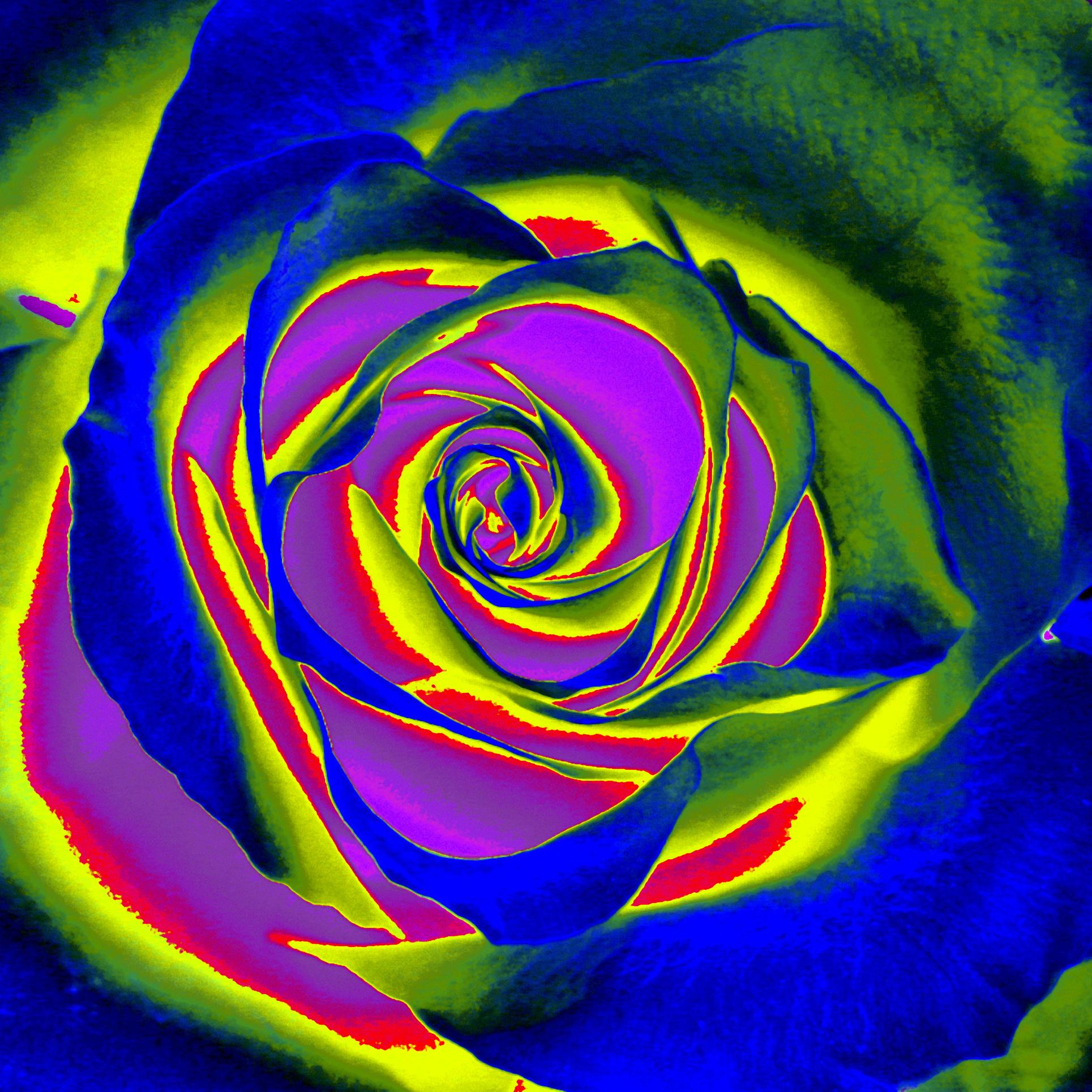 Salad as a rose/ Šalát ako ruža