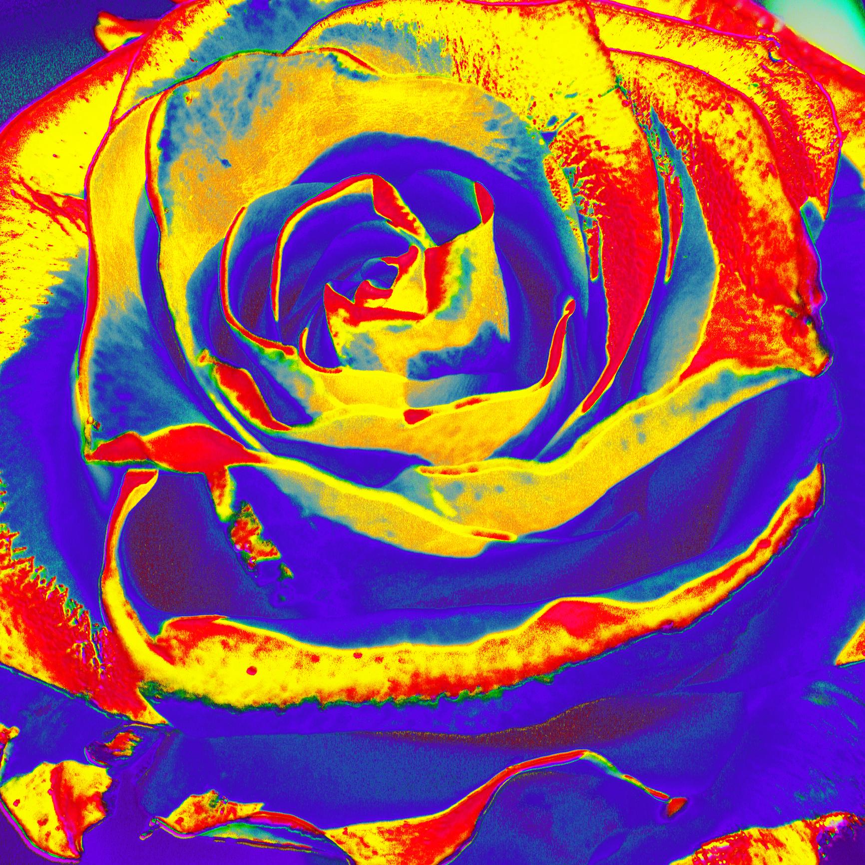Salad as a rose I./ Šalát ako ruža I.
