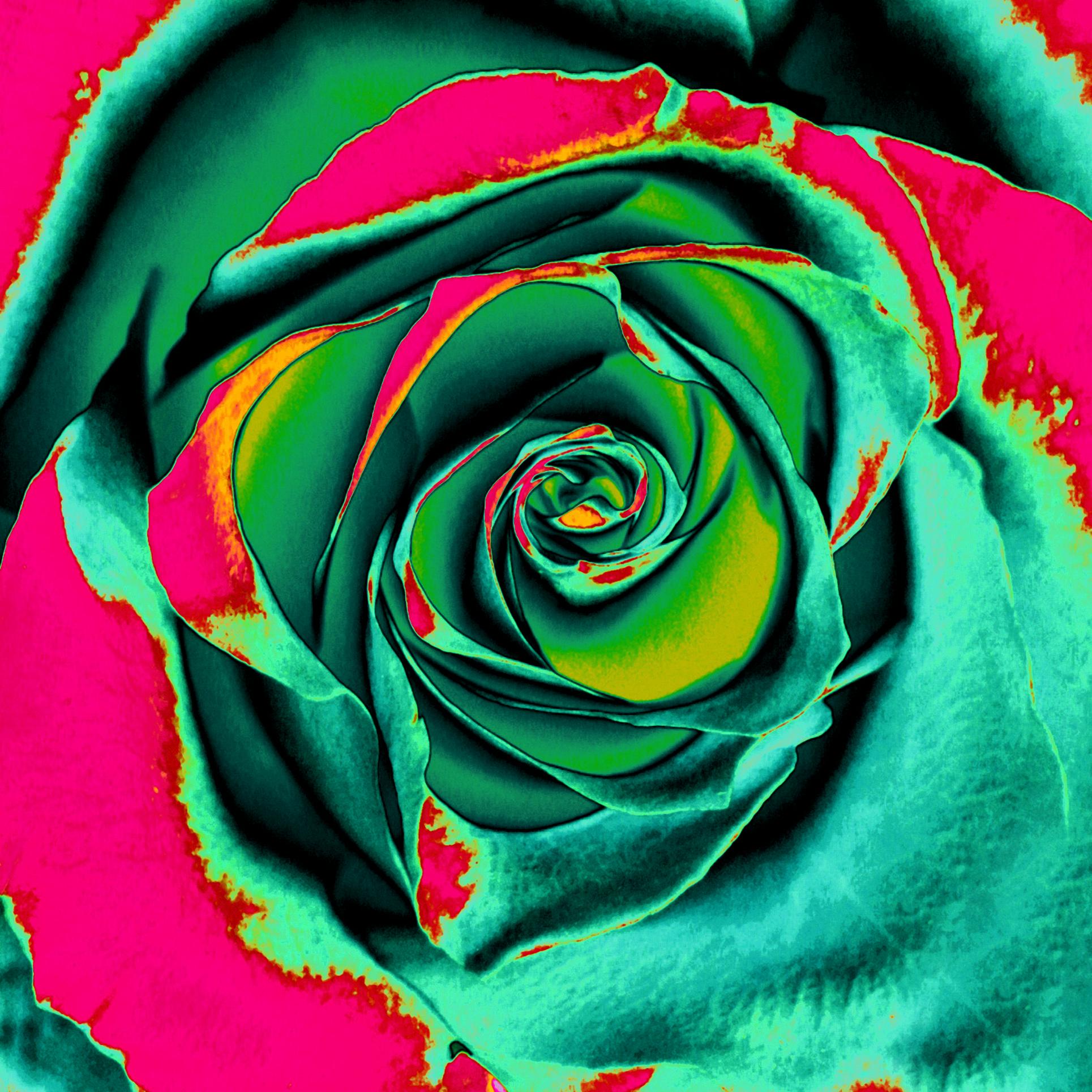 Salad as a rose III./ Šalát ako ruža III.