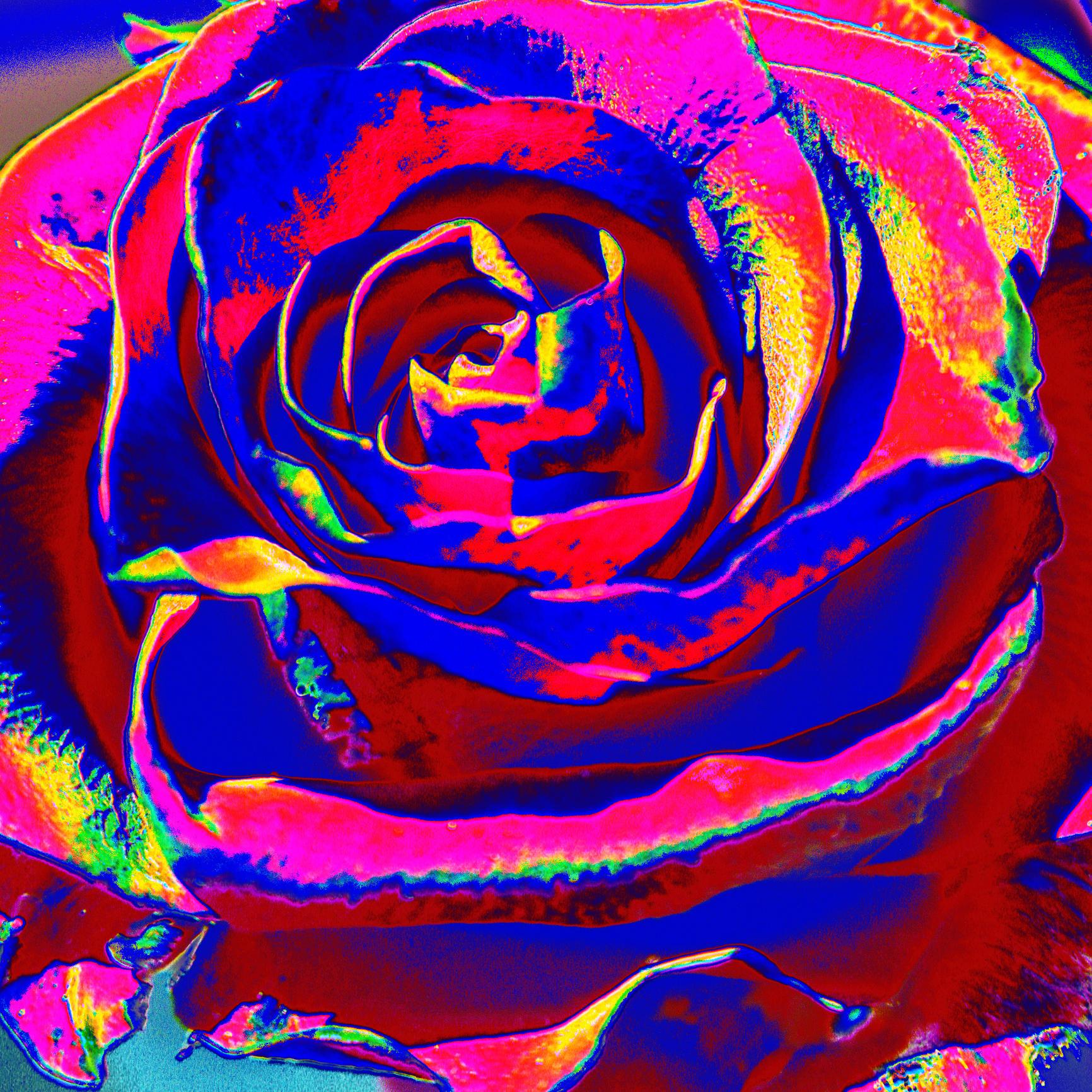Salad as a rose V/ Šalát ako ruža V.