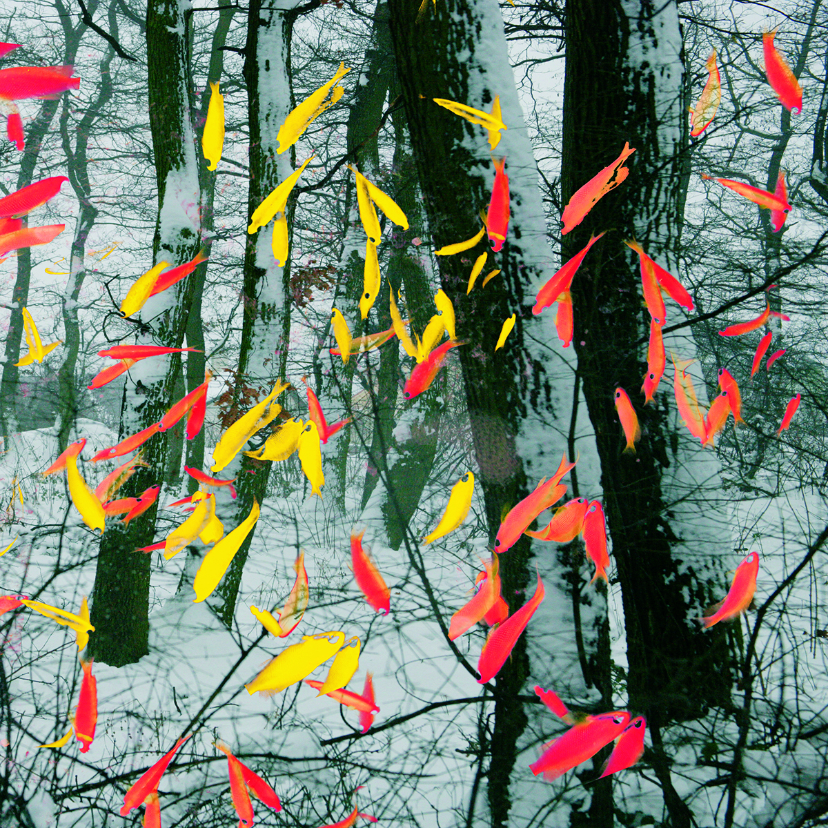 Fishes in the woods/ Ryby v lese