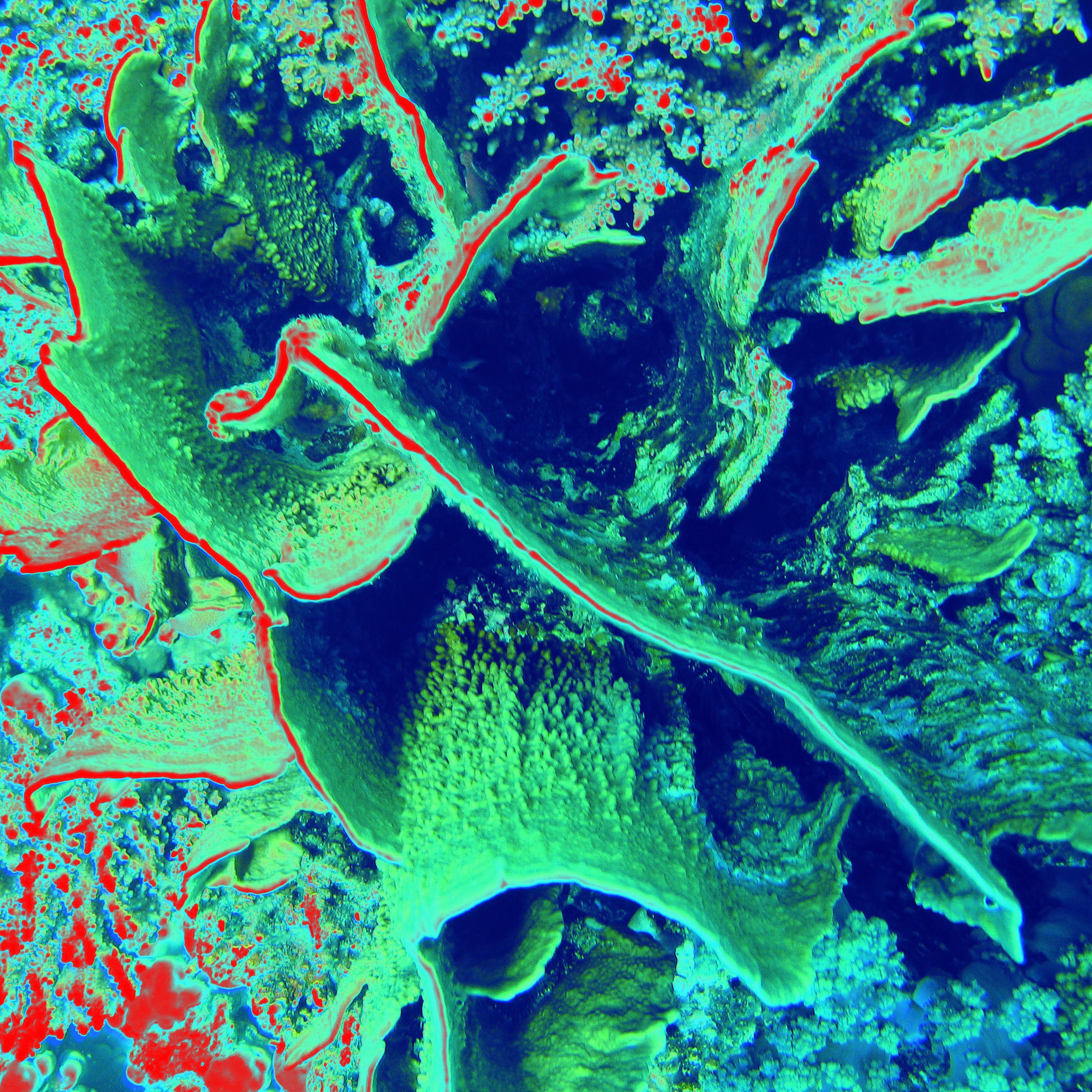 Coral/ Korál