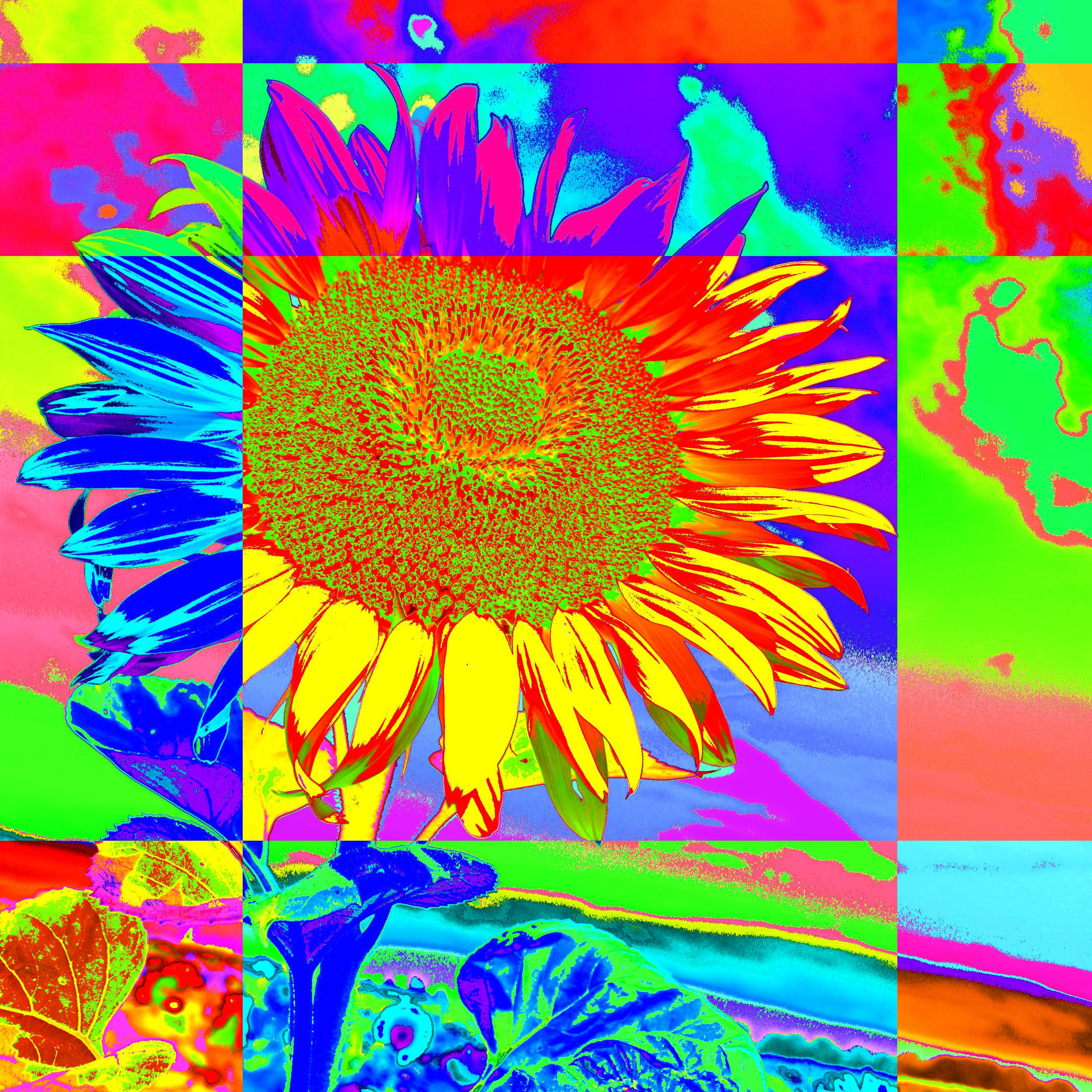 Merry sunflower/ Veselá slnečnica
